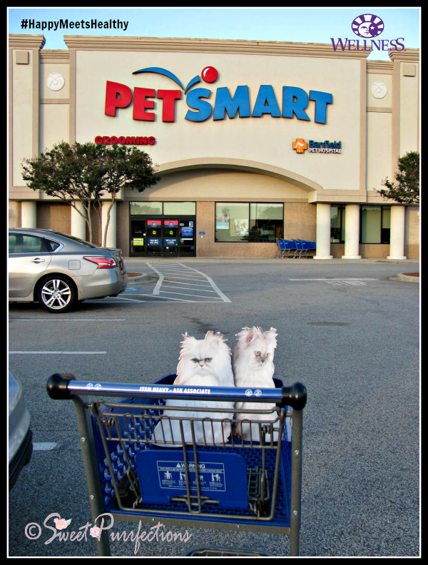 Flat Brulee and Flat Truffle at PetSmart