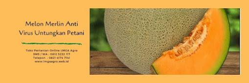 kalori melon, buah melon, manfaat buah melon, cara menanam melon, jual benih melon, toko pertanian, online shop, lmga agro
