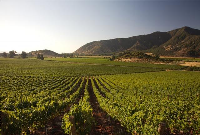 Conhecer a vinícola Concha Y Toro