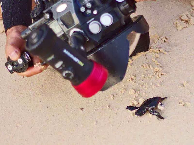 large camera, small turtle