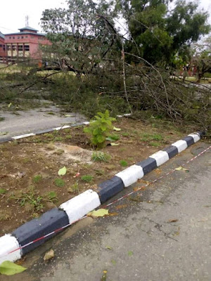 Midnight rain pulls down trees and takes off hostel roofs in unical