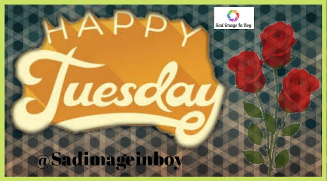 Happy Tuesday images   good morning tuesday funny, happy tuesday images and quotes