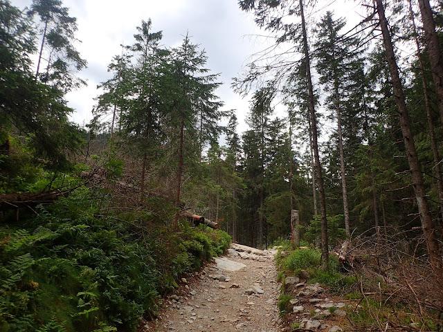Wkraczamy do lasu