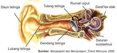 Hasil gambar untuk cara kerja telinga