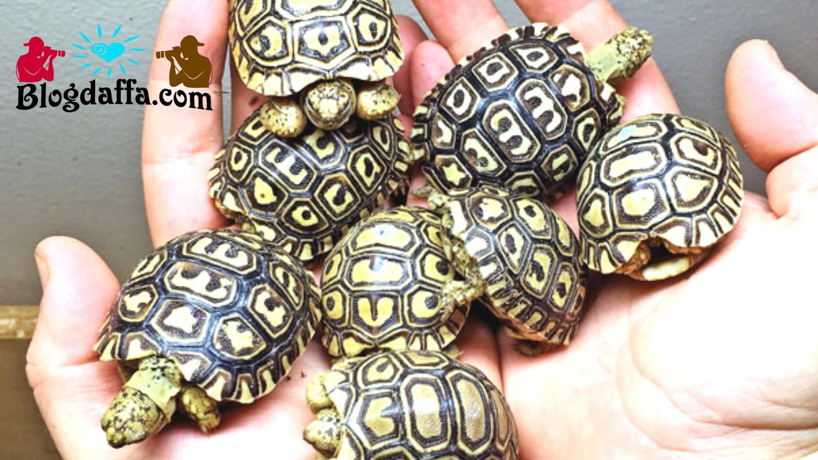 Pahami jenis-jenis penyakit pada kura-kura