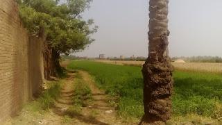 Farmland in Egypt April 2016