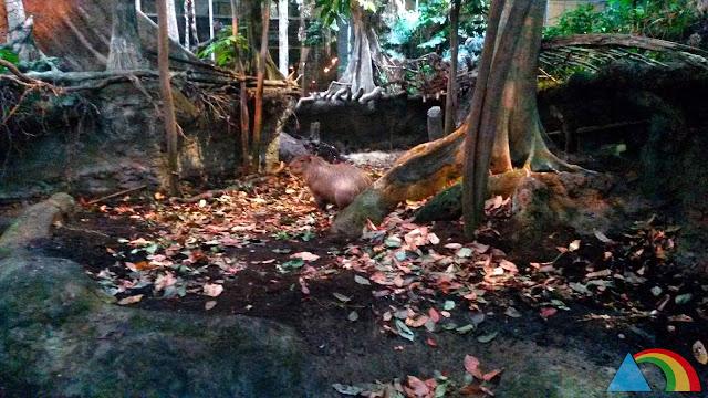 Capibara del Bosque Inundado de CosmoCaixa Barcelona