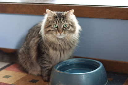 Cat with water bowl