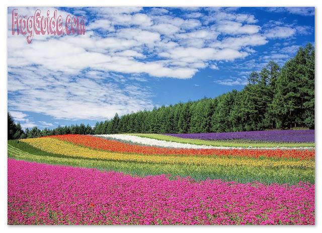 صناعة العطور والزهور   أنواع متعددة من الأزهار تصنع السعادة