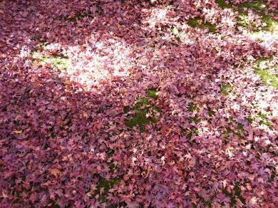 龍尾寺境内 地面に敷き詰められたもみじの落ち葉