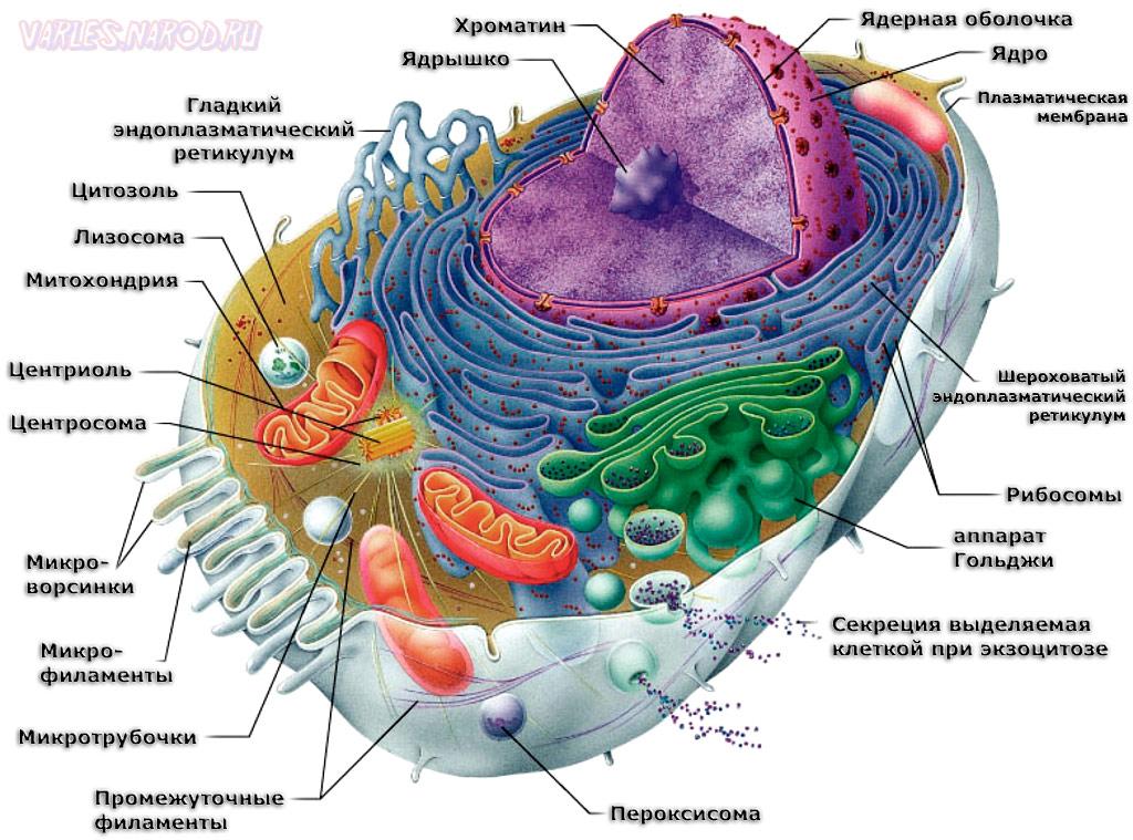 контрольные вопросы по биологии 6 класс