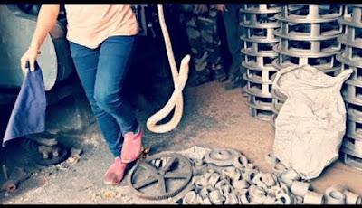 Wanita menangkap ular kobra