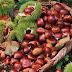 Δυναμικά επιστρέφει το κάστανο στο ελληνικό τραπέζι