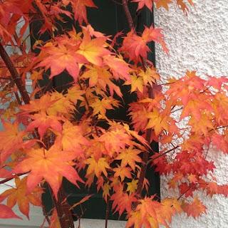 Pflanzen mit schönem Herbstlaub