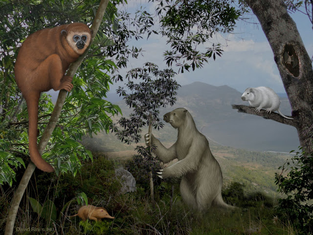Caribbean islands reveal a 'lost world' of ancient mammals