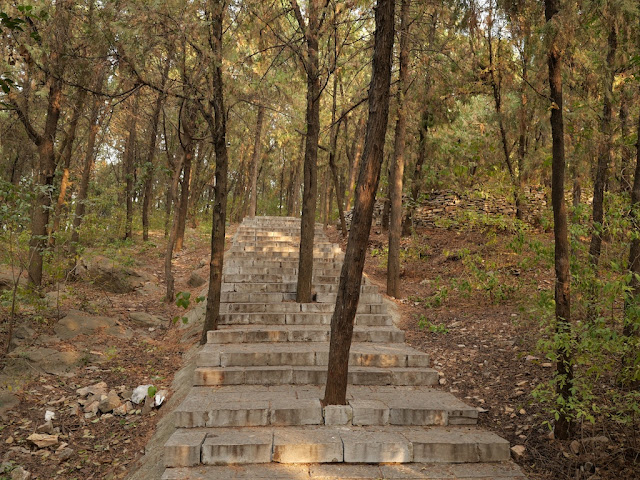 stone steps with spaces for trees to grow through them on a hill