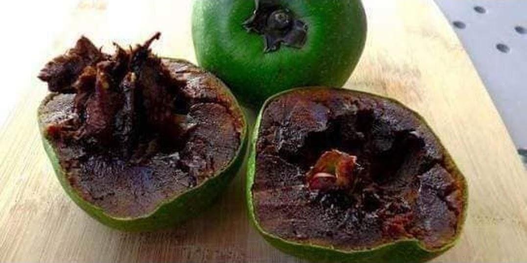 bibit blacksapote sawo hitam Jambi