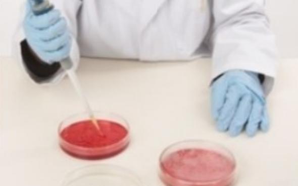 Το χρονικό της κηροσκωρίνης: Τα λάθη που έγιναν ας μην επαναληφθούν