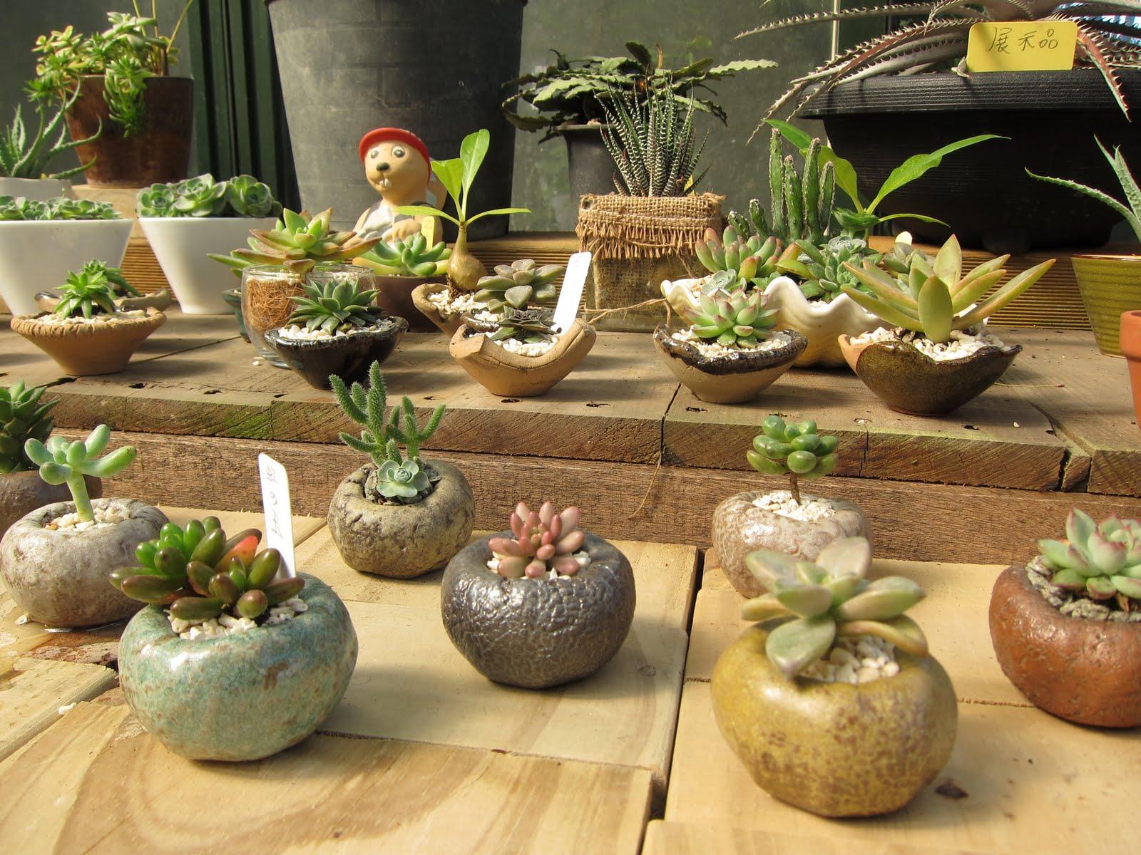 Succulents-lover 阿多肉: 再逛田尾(2):鴻霖園藝