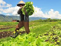 Jangan Pernah Malu Orang Tua Kita Petani Karena Rizkinya Berkah Dunia dan Akhirat