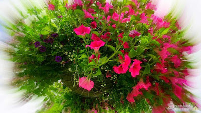 Hanging flower baskets beautifully dress up a porch or patio