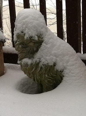 January 2016 snow cat