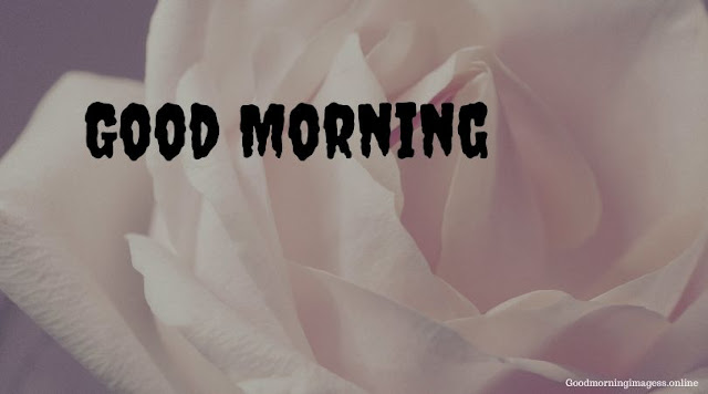 Good Morning Images In Roses 11