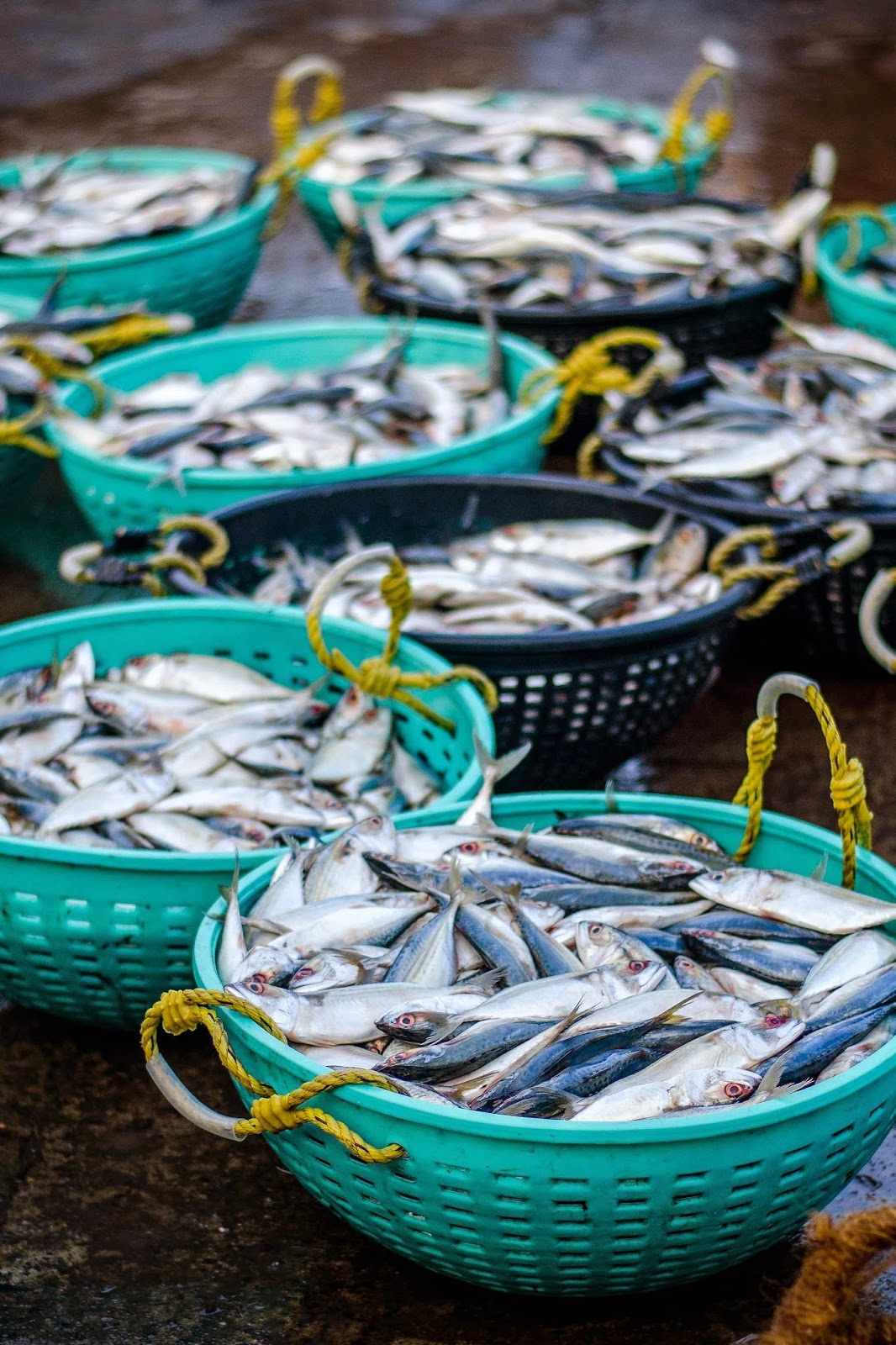 Fish Market in Mangalore  - Silver Fish