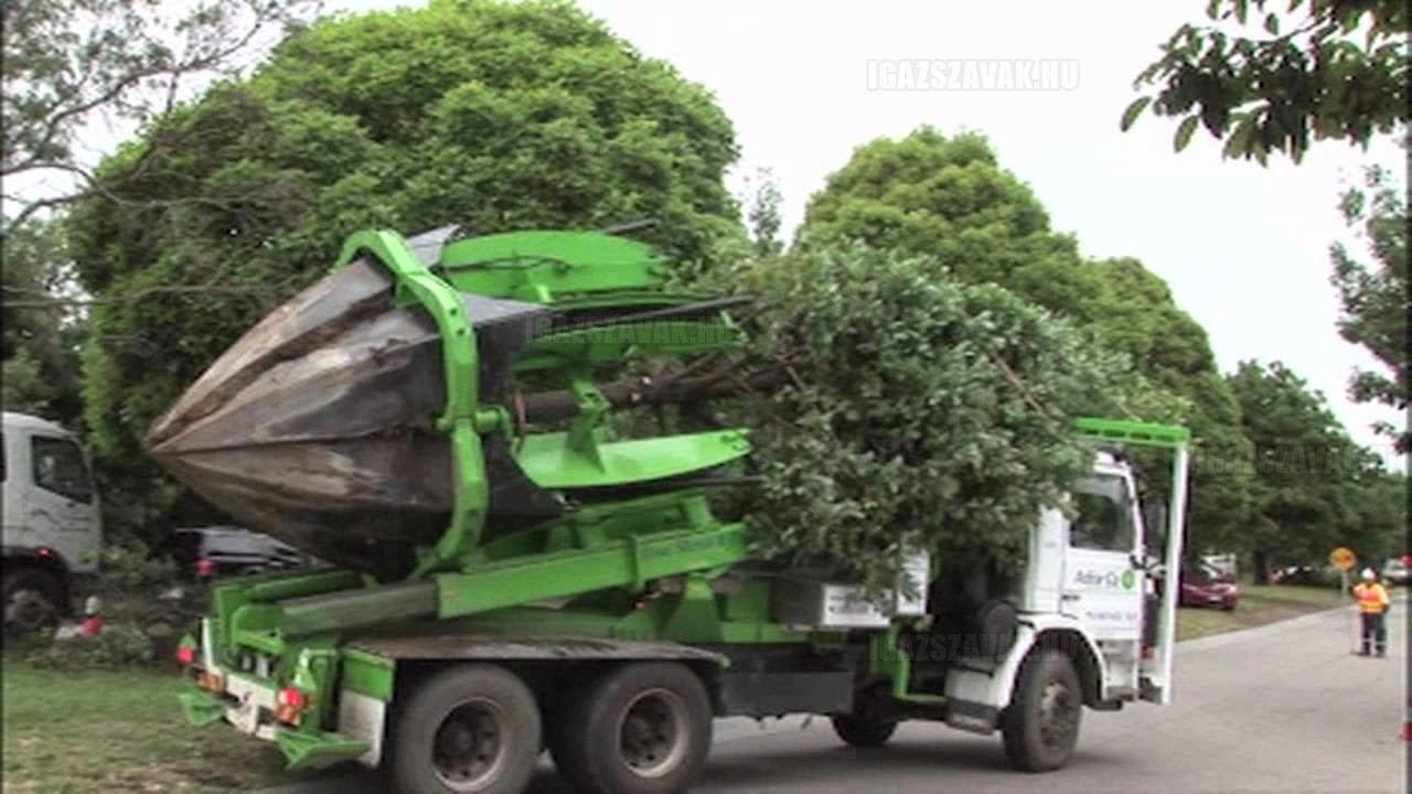 Van ahol nem kivágják a fákat, hanem elköltöztetik