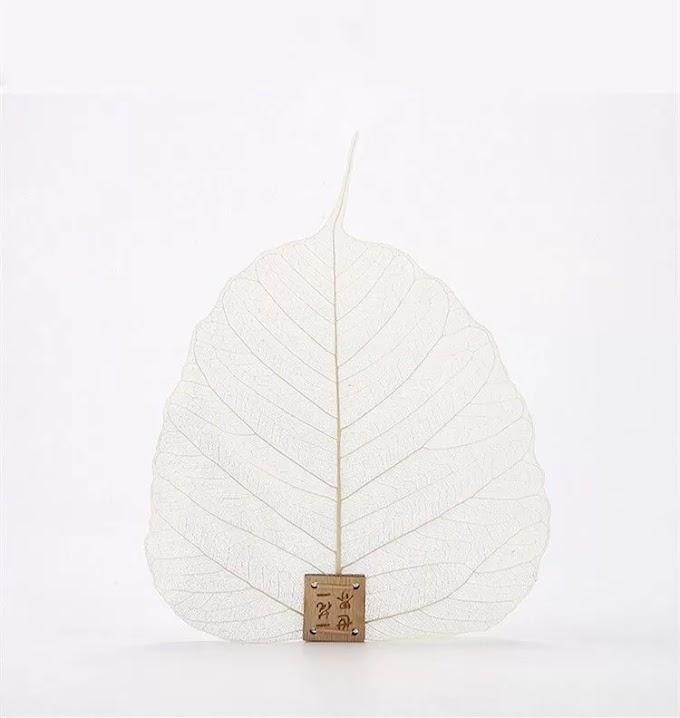 Φίλτρο τσαγιού από πραγματικά φύλλα δέντρου Bodhi