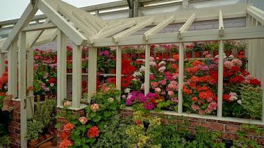 Invernaderos de cristal y sus plantas cautivas