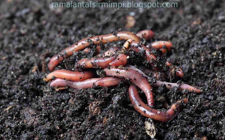 pasinya kita sudah sering melihat cacing tanah yang menggeliat dan berwarna kecoklatan 11 Arti Mimpi Melihat Cacing Menurut Primbon Jawa yang Lengkap