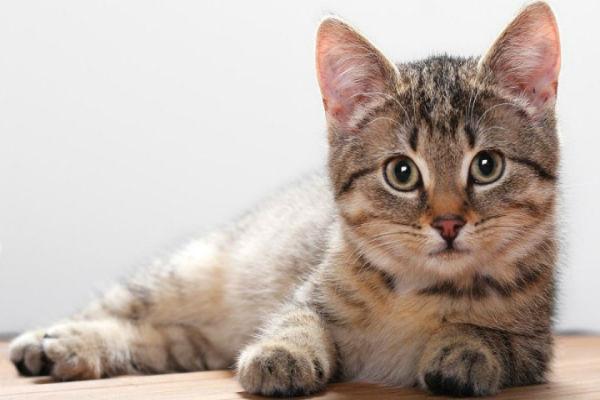 Hewan Mamalia: Pengertian, Ciri dan Klasifikasinya