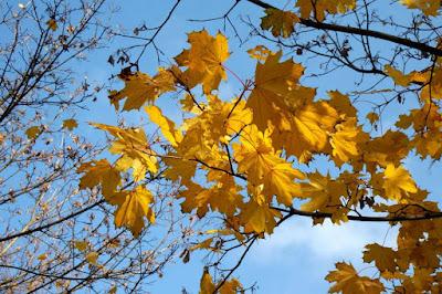 Yellow autumn leaves of Bratislava Slovakia