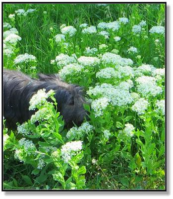 Blumen mit herrlichem Duft