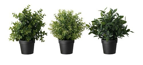 FEJKA plants
