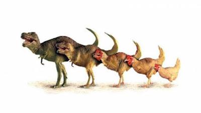 evrim nasıl oluşur