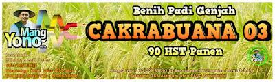 Jual Benih Padi CAKRABUANA 03 (CB03)