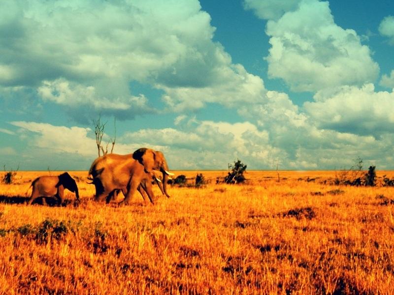 savanna biome location