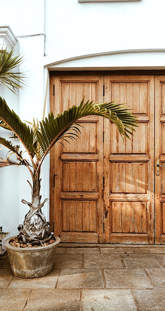 Pondicherry-travel-weekend-getaway-style prism-blog-street photography-door-plant-palm