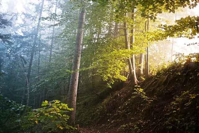 Kerugian bila hutan musnah