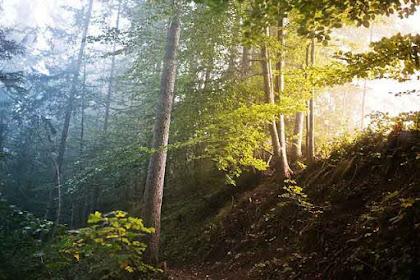 5 Kerugian Yang Akan Timbul Jika Hutan Musnah