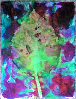 Solar dye print, host leaf, by Sue Reno