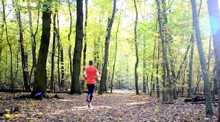 Laufstrecke Wald