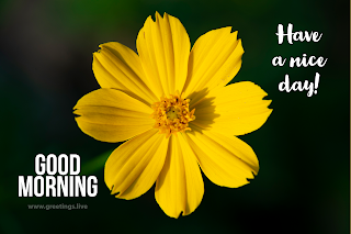 Have a nice day image with good morning yellow flower