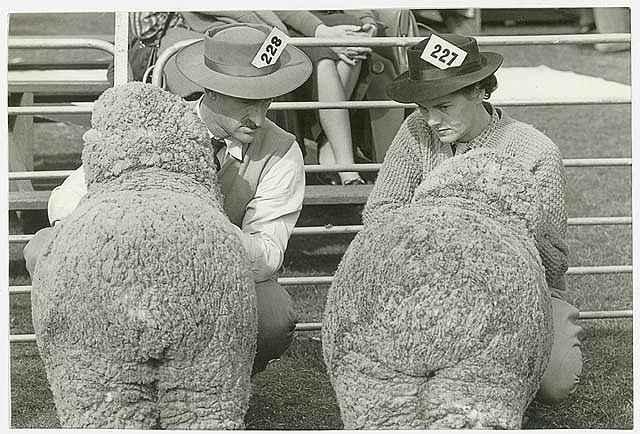 Two exhibitors eye eachother's charges, Sheep Show, ca. 1945, Jeff Carter, Walkabout photograph. Notes: This photograph is from a collection of images taken for Walkabout magazine, between 1934 and 1974. From the collection of the State Library of New South Wales