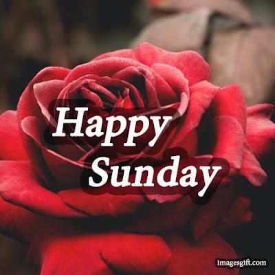 happy sunday status dp