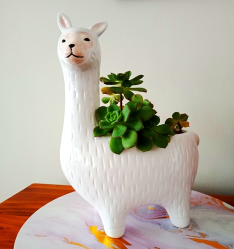 Louise the llama - my new succulent plant pot - isn't she cute?