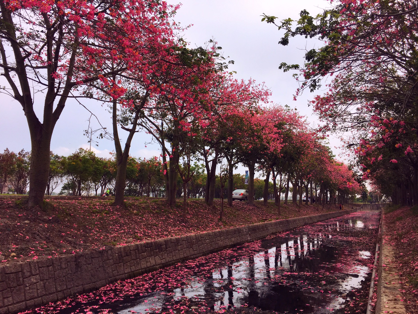 Silk Floss Trees And Other Flowers In Yunlin Everlasting Journey