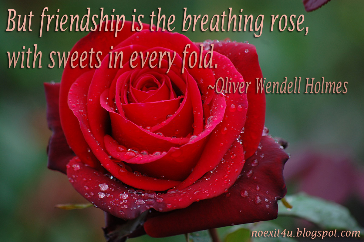 Rose Quotes About Life. QuotesGram